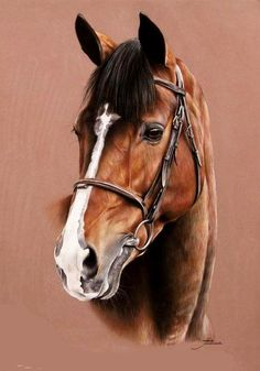 A Fine Looking Friend and Companion - Tubiana Marion - Pastels et photographies: Horse Drawings, Realistic Drawings, Animal Drawings, Art Drawings, Horse Pictures, Art Pictures, Horse Artwork, Horse Portrait, Animal Paintings