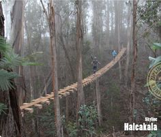 Haleakala Skyline Tour, Maui, Hawaii  T&L World's Coolest Ziplines at:  http://www.travelandleisure.com/articles/worlds-coolest-ziplines/12