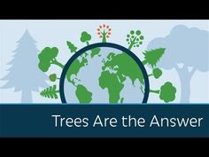 Trees Are the Answer - YouTube