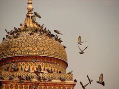 Pigeons on the dome of the Wazir Khan Mosque. #Pakistan