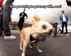 Cute Humorous Animals photos (9:23:24 AM PST  Sunday, February 8, 2015) – 17 pics