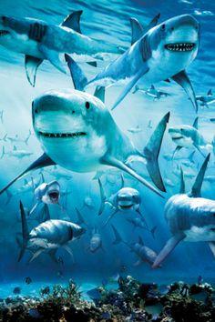it's shark week! :)