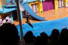 Disney Travel Tips and Hints: Clyde and Seamore's Sea Lion High show at SeaWorld Orlando Disney Travel, Disney Trips, Seaworld Orlando, Sea World, Travel Tips, Lion, Leo, Travel Advice, Lions