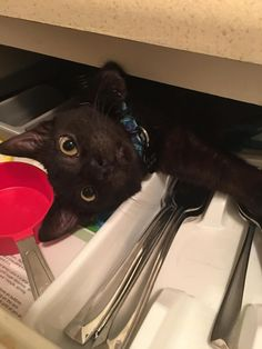Uhhhh wait! I can explain!! I was tryin to find a can opener for that can of tuna you have in the cabinet.