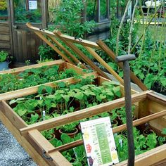 Cold frame to grow vegetables and greens in the fall or winter and a place to start new plants for spring