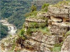 vegetação do grand canyon - Pesquisa Google