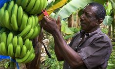 Oxfam's Go Bananas lessons give teaching ideas and fair trade inspiration. Primary Teaching, Teaching Social Studies, Teaching Activities, Teaching Science, Teaching Ideas, Fairtrade Fortnight, Online Stock Trading, Global Citizenship, Global Awareness