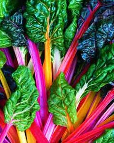 Rainbow Chard: Swiss Chard Bright lights grows until late frost. Milder taste than ordinary chard. Use as you would spinach. Naturally low in both fat & calories. High in Vit A and also good source for Vit C, Iron, Calcium and Fiber. Edible Garden, Easy Garden, Garden Tips, Summer Garden, Growing Vegetables, Fruits And Veggies, Fresh Vegetables, Photo Fruit, Potassium Rich Foods