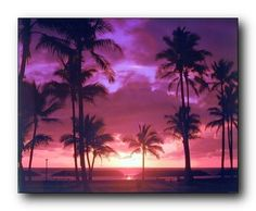 Tropical Palm Trees Purple Sunset On Ocean Beach Nature Wall Art Print Picture (8x10)