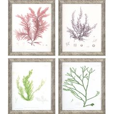 Bay Isle Home 'Seaweed I' 4 Piece Framed Graphic Art Print Set Coastal Art, Coastal Style, Wall Art Sets, Framed Wall Art, Traditional Looks, Furniture For Small Spaces, Beach Art, Seaweed, Graphic Art