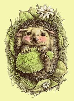 You can't beat a hedgehog! Little hedgehog by ELINA CHERIANIDOU This was to… You can't beat a hedgehog! Little hedgehog. Colouring Pages, Adult Coloring Pages, Coloring Books, Coloring For Adults, Animal Drawings, Art Drawings, Pencil Drawings, Awesome Drawings, Zentangle Drawings