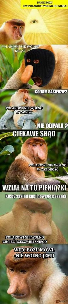 Polish Memes, Funny Mems, Good Mood, Nice View, Funny Photos, Fantasy, Funny Memes, Fanny Pics, Fantasy Books