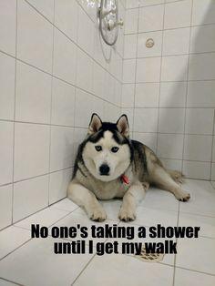 Hahaha! Ok, Husky, ok...