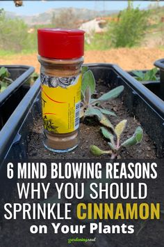 Greenhouse Gardening, Container Gardening, Growing Vegetables, Growing Plants, Organic Gardening, Gardening Tips, Garden Solutions, Home Vegetable Garden, Outdoor Plants