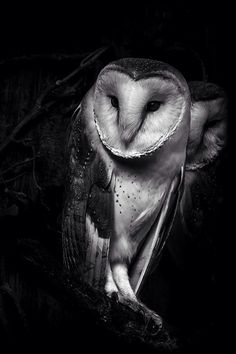 Sometimes I wish to be an owl.