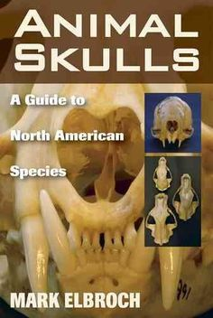 Animal Skulls: A Guide to North American Species