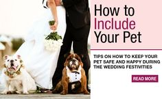 Thinking about including your favorite pet in your wedding?  Here's a good article to read before you head down the aisle.  ~ Rev. Jude Smith / HudsonValleyWeddings.org ~ Destination weddings a specialty.  Your place or mine!