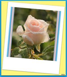 Una rosa es una flor, un billón una fortuna, y una amiga como tú, no la cambio por ninguna