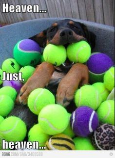 Dog+balls=Happy Dog ^^