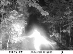 This photo was taken on a wildlife camera in North Georgia. Property owners were observing a light in the woods off from their house at night. Believing the light source was coon hunters a camera was set up to attempt to catch trespassers. The property owner checked the camera the next day and found this image. Another photo collected from a DNR (Department of Natural Resources) Ranger about the same week on a different camera at a different location that is similar to this picture.