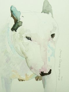 English Bull Terrier - Original Watercolour with coloured mount Dog Painting