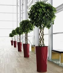 Image result for plant
