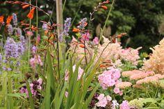 Wat kleur kon de tuin van radio-nieuwslezeres Hannelore Zwitserlood nog wel gebruiken. Samen met Tom ging ze aan de slag en plantte ze een zee van bloemen, én planten.