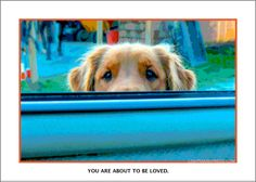 Mackie the Golden retriever, approaching the driver of a Mazda 626 sedan (me).    Photographed on Vashon Island, WA. Every card has a story about the dog or dogs on the back. 5 x 7 card with envelope, sustainably printed in the USA! $3.25 direct from website, retail and wholesale, fast shipping.