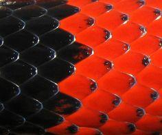 Snakeskin closeup