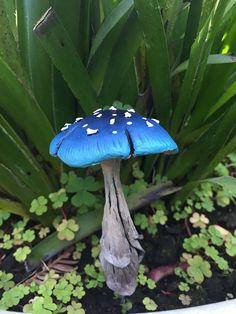 Mushroom Art, Mushroom Fungi, Wild Mushrooms, Stuffed Mushrooms, Wallpaper Fofos, Mushroom Pictures, Plant Fungus, Nature Aesthetic, Fairy Houses