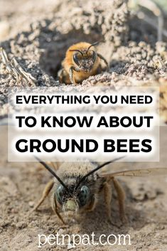 What are ground bees? Find out all about Ground Bees! Dog Grooming Business, Pet Grooming, Animal Nutrition, Pet Nutrition, Ground Bees, Black Lab Puppies, Corgi Puppies, Chihuahua Dogs, Bee Pictures