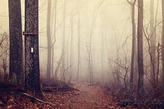 What a spooky and beautiful photo! Landscape Fine Art Photograph, Appalachian Trail Photo, Maryland, Hiking, Winter, Trail Head, Woodland, Serenity, Brown, Foggy, 8x12 Print / prettypetalstudio etsy.com