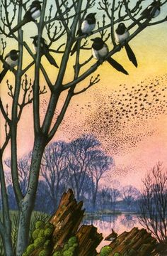 A red sunset on a frosty evening. C. F. Tunnicliffe