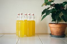 limoncello - good recipe and not a lot of filtering