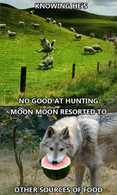 """noseriouslyofficial: """" Poor Moon Moon """""""
