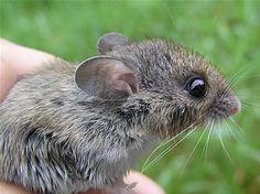 Carl Brenders mice - Google Search