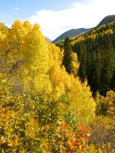 Castle Creek Valley near Aspen, Colorado