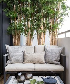 41 Creative Diy Small Apartment Balcony Garden Ideas bamboo for . - 41 Creative Diy Small Apartment Balcony Garden Ideas bamboo for privacy - Small Balcony Decor, Small Balcony Garden, Small Balcony Design, Balcony Plants, Small Balconies, Modern Balcony, Small Terrace, Small Balcony Furniture, Balcony Bench