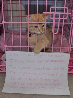 cat shaming jail. The saddest thing is that it is VERY rare for there to be a FEMALE orange tabby. Which means this is most likely a boy kitten stuck in all this pink. Very shameful indeed