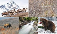 British photographer captures the wonders of Alaska's wilderness