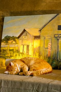 linus the cat with art