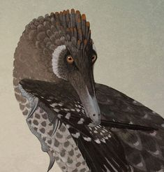 The velociraptor has long been depicted as a scaly creature. That's all changing as fossil evidence shows how widespread feathers were among dinosaurs. Preening velociraptor illustration by John Conway.