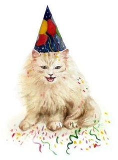 Birthday Cat!