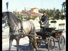 Costa Blanca Quesada Pony and Traps.MP4