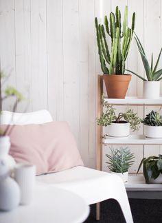 Cactus, fácil de mantener y entregan al espacio esa onda minimalista y rústica al mismo tiempo.