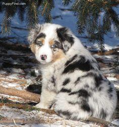 So pretty.  Jasper needs a friend ;)