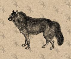Vintage image Wolf Instant Download Digital printable retro picture clipart graphic for collage prints fabric transfer burlap etc HQ 300dpi by UnoPrint on Etsy