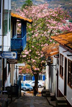 Diamantina - Minas Gerais, Brazil Wow  I love that tree in the middle Awwwww beautiful, hermoso, bello!!!