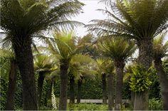 Landscape Focused: East Ruston Old Vicarage Gardens, Norfolk, in...