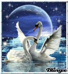 Beautiful Swan, Beautiful Birds, Animals Beautiful, Swan Drawing, Sunflower Iphone Wallpaper, Swan Pictures, Dolphin Photos, Lotus Art, Wildlife Paintings